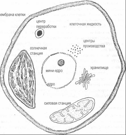 Основные компоненты клетки