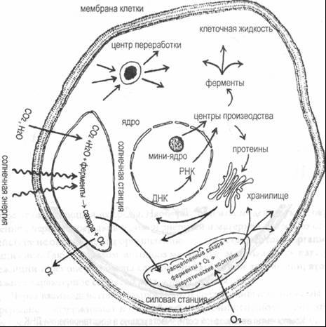 схема клетки растения,