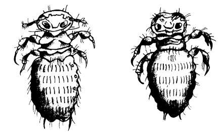 распространенные паразиты организме человека