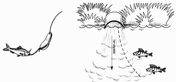 Ловля окуня на мормышку по открытой воде