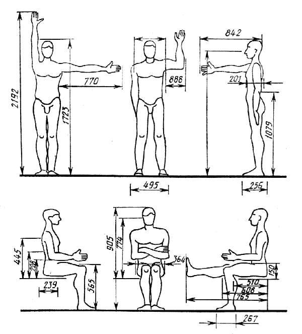 размеров тела человека в