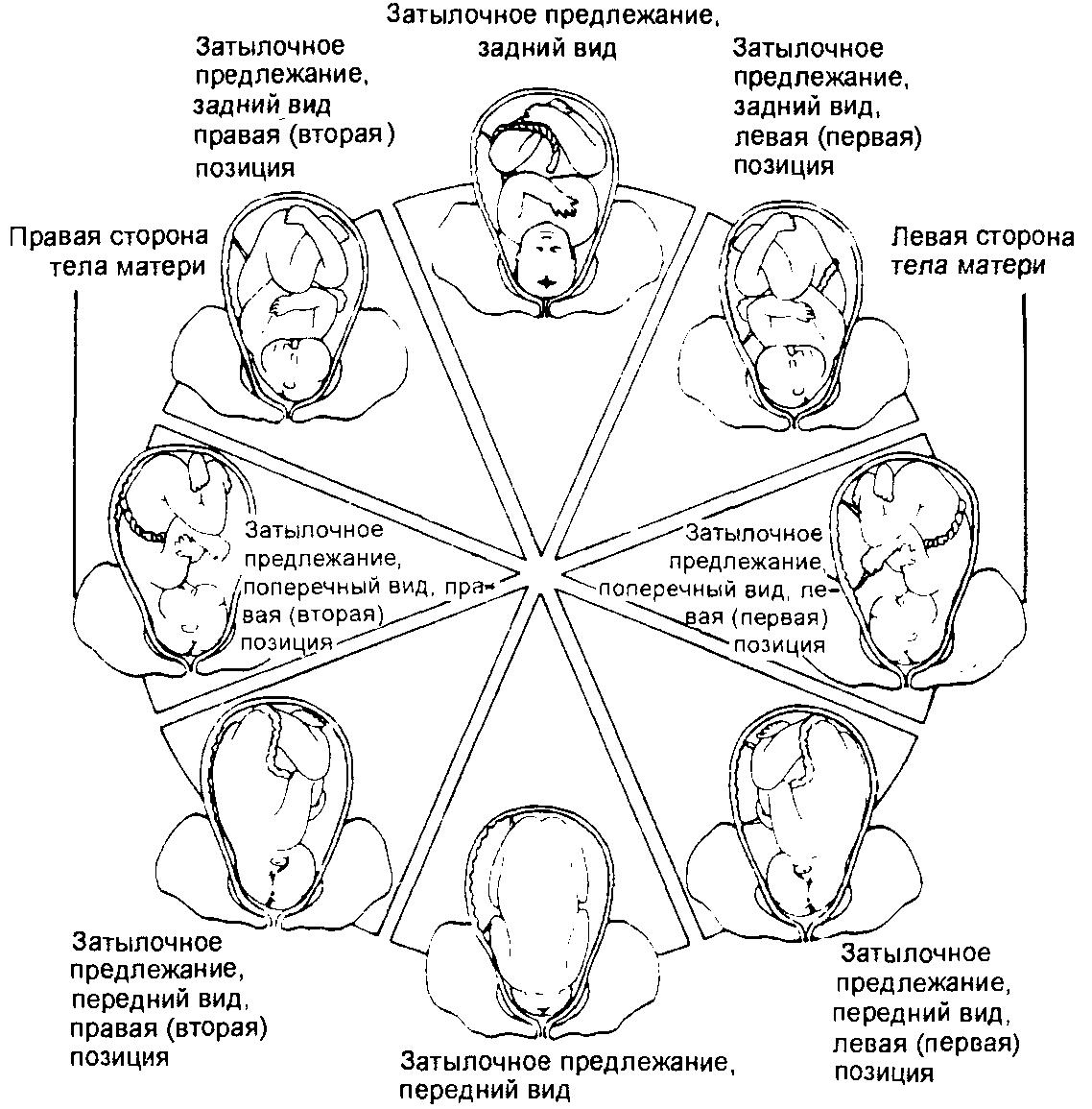 Определить симуляцию оргазма по смазке возможно если вы не используете