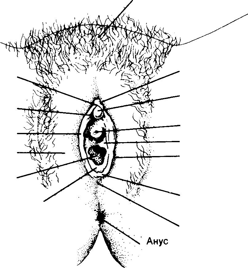 Гимен разрыв фото фото 182-424