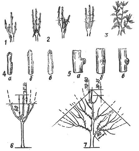 Техника обрезки деревьев.