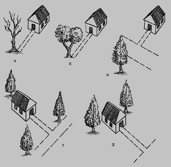 Влияние деревьев на фэн-шуй