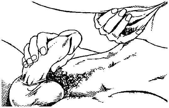 Первое вхождение пениса во влагалище фото фото 593-627
